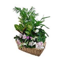 livraison de fleurs founex fleuriste founex 1297. Black Bedroom Furniture Sets. Home Design Ideas